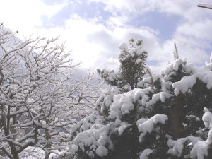 Takao_snow